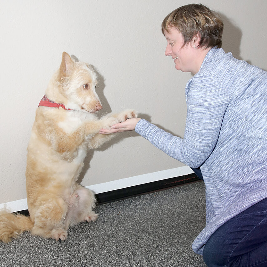Tiergestützte Therapie mit Hund Bono in der Ergotherapie Kuschel in Köln Ostheim